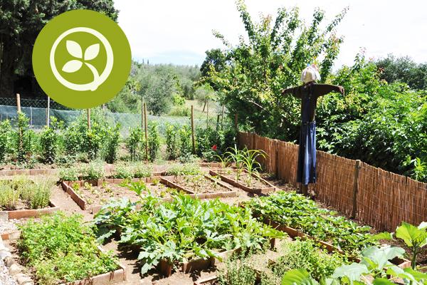 comprar fruta y verdura ecologica