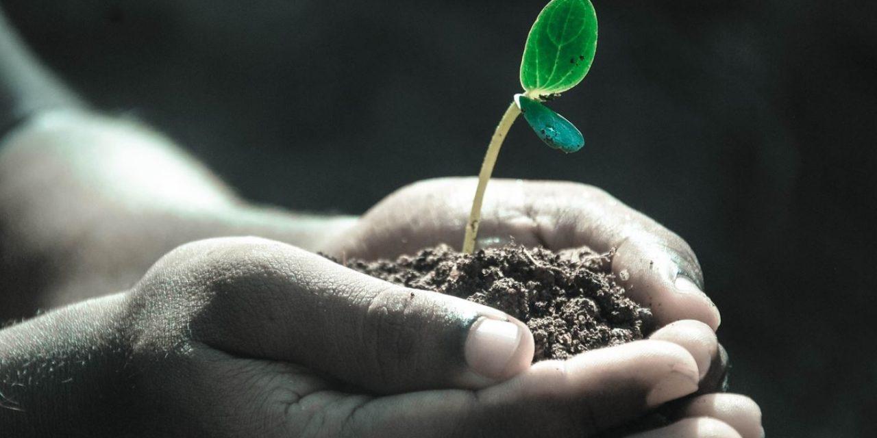 El placer de cuidar plantas y jardines.