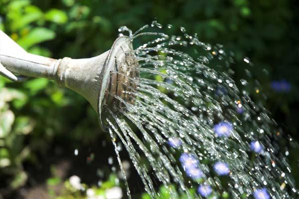 fotografia de renganso un jardin