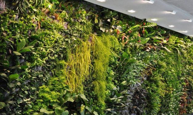 Jardines verticales: el ecosistema que decora tu casa.