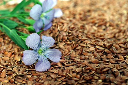 7637288 - the plant of flax from blue flowers on seeds