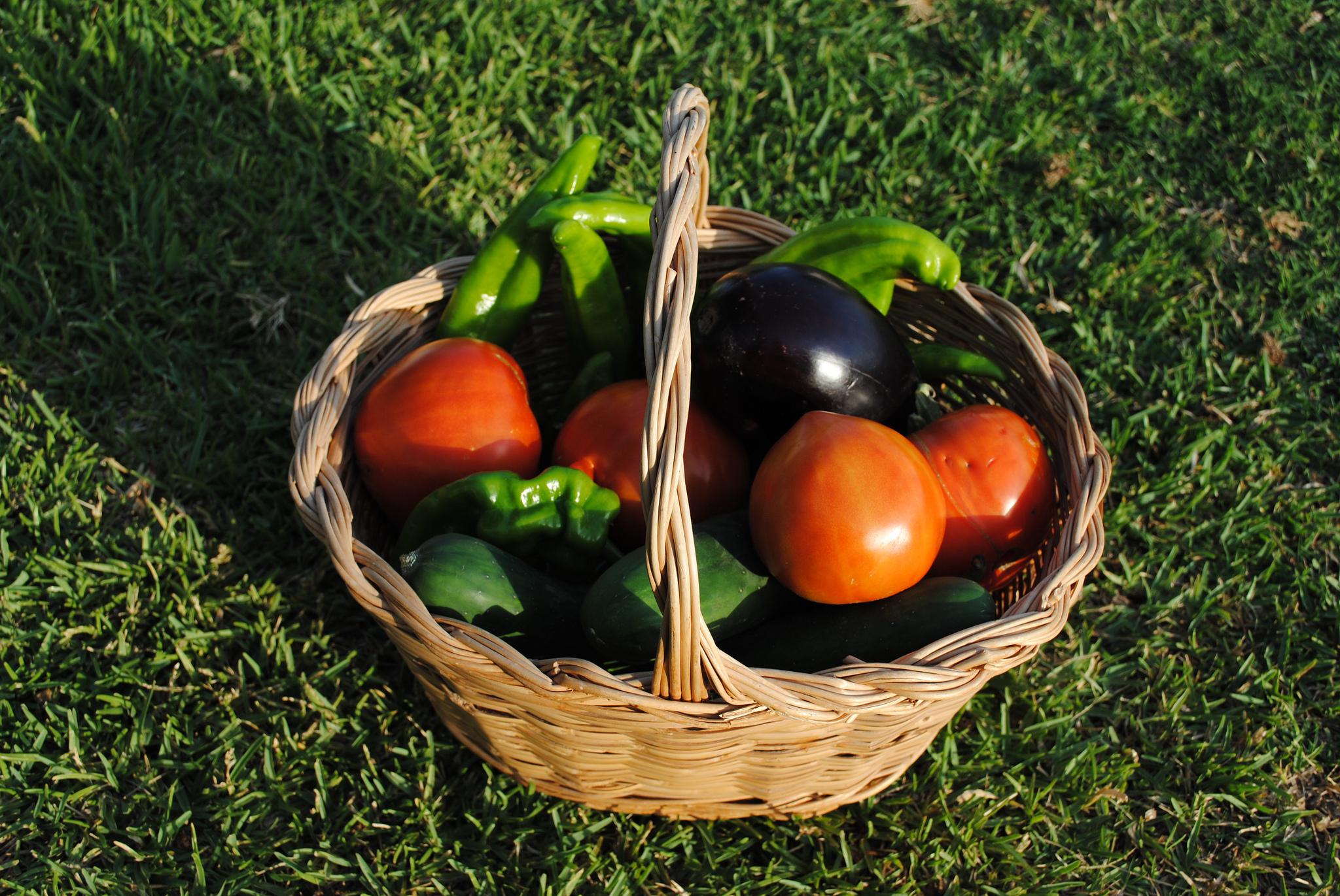 cesta fruta mercado ecológico internet