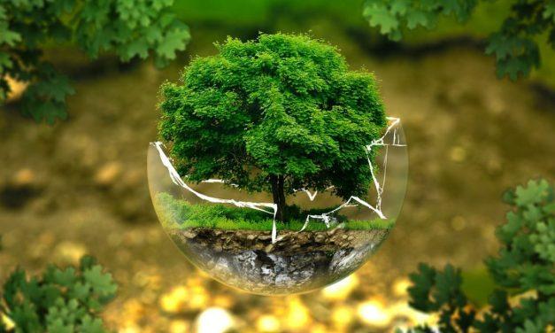 El ecologismo que te sienta bien.