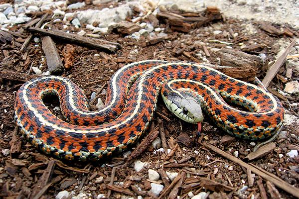 Serpiente enroscada en su habitat