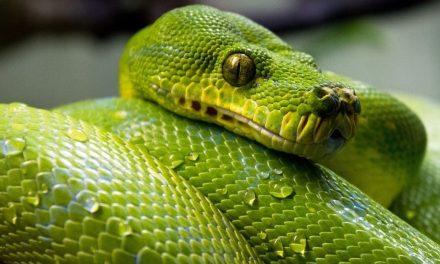 Las serpientes ayudan al equilibrio ecológico.