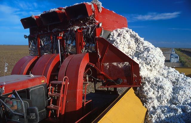 Cultivo intensivo de tejidos de algodón00