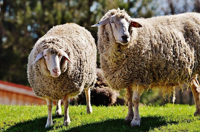 Tejidos de lana ecológicos