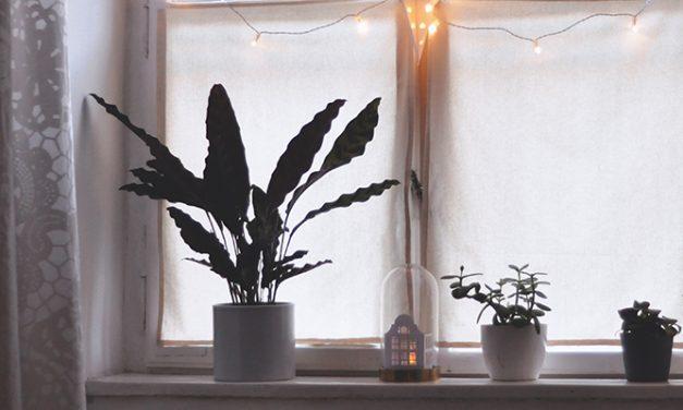 Mejora el confort térmico con ventanas sostenibles de PVC