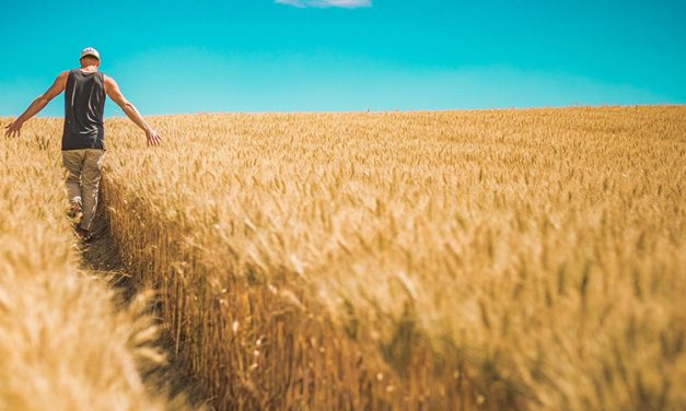 La importancia de la sostenibilidad a la hora de cultivar y maximizar una cosecha en el campo